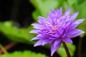 rmutp.flower-300x199