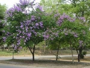 rmutp.tree_-300x226